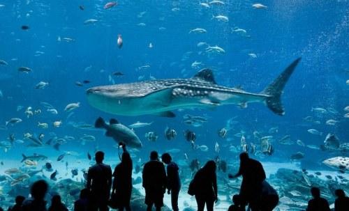 Aquarium in Atlanta, Georgia